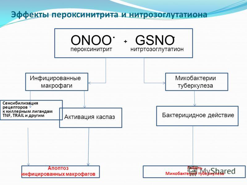 Эффекты пероксинитрита и нитрозоглутатиона ONOO. GSNO. пероксинитритнитртозоглутатион + Инфицированные макрофаги Микобактерии туберкулеза Сенсибилизация рецепторов к киллерным лигандам TNF, TRAIL и другим Н Активация каспаз Апоптоз инфицированных мак