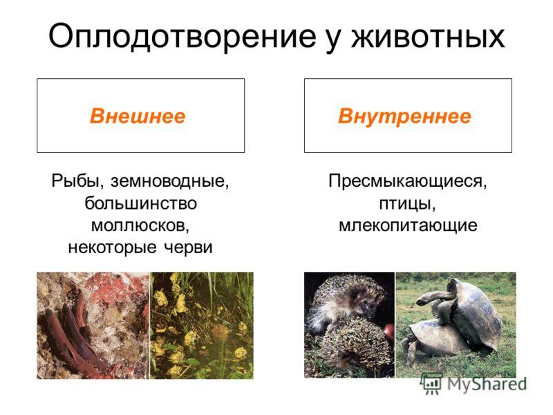 Оплодотворение у животных ВнешнееВнутреннее Рыбы, земноводные, большинство моллюсков, некоторые черви Пресмыкающиеся, птицы, млекопитающие