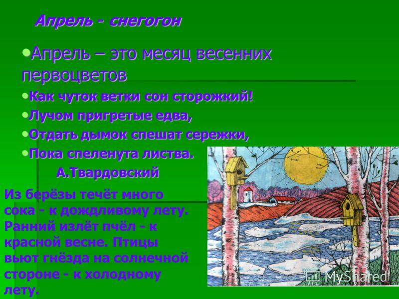 Апрель - снегогон Апрель – это месяц весенних первоцветов Апрель – это месяц весенних первоцветов Как чуток ветки сон сторожкий! Как чуток ветки сон сторожкий! Лучом пригретые едва, Лучом пригретые едва, Отдать дымок спешат сережки, Отдать дымок спеш