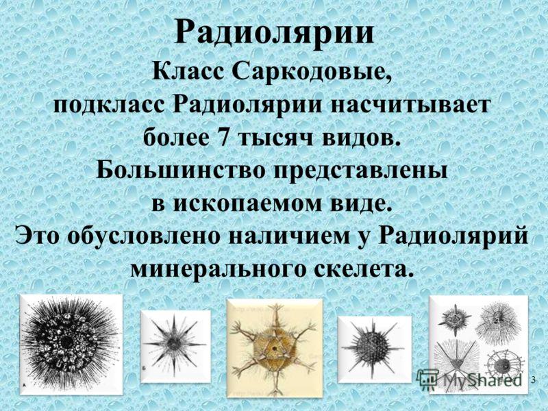 Радиолярии Класс Саркодовые, подкласс Радиолярии насчитывает более 7 тысяч видов. Большинство представлены в ископаемом виде. Это обусловлено наличием у Радиолярий минерального скелета. 3
