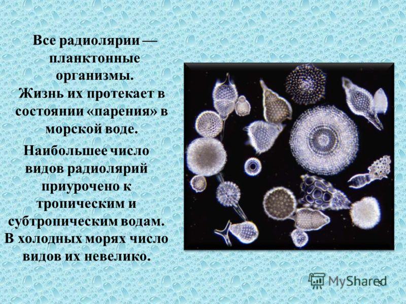 Все радиолярии планктонные организмы. Жизнь их протекает в состоянии «парения» в морской воде. Наибольшее число видов радиолярий приурочено к тропическим и субтропическим водам. В холодных морях число видов их невелико. 5