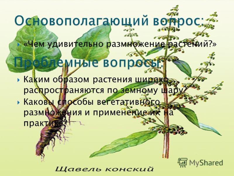 «Чем удивительно размножение растений?» Каким образом растения широко распространяются по земному шару? Каковы способы вегетативного размножения и применение их на практике?