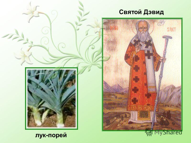 лук-порей Святой Дэвид