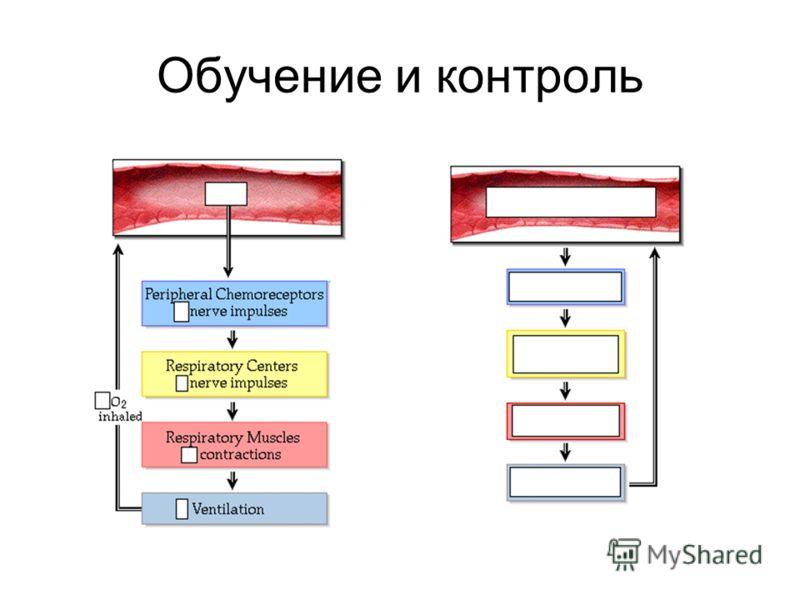 Обучение и контроль