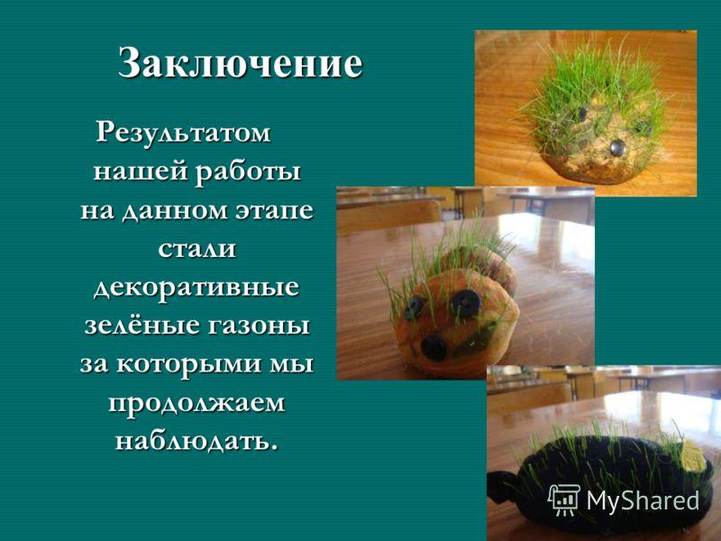 Заключение Результатом нашей работы на данном этапе стали декоративные зелёные газоны за которыми мы продолжаем наблюдать.