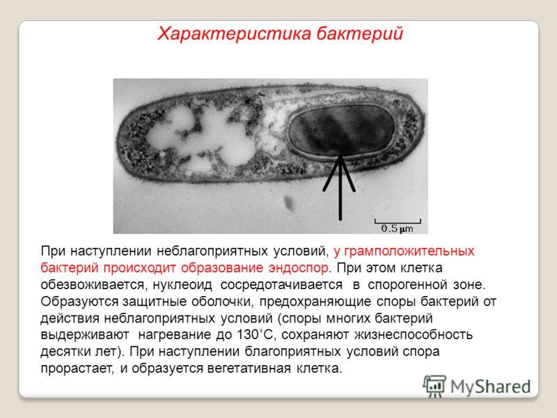 При наступлении неблагоприятных условий, у грамположительных бактерий происходит образование эндоспор. При этом клетка обезвоживается, нуклеоид сосредотачивается в спорогенной зоне. Образуются защитные оболочки, предохраняющие споры бактерий от дейст