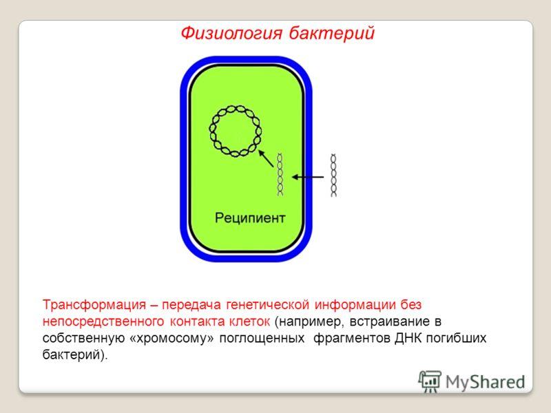 Трансформация – передача генетической информации без непосредственного контакта клеток (например, встраивание в собственную «хромосому» поглощенных фрагментов ДНК погибших бактерий). Физиология бактерий
