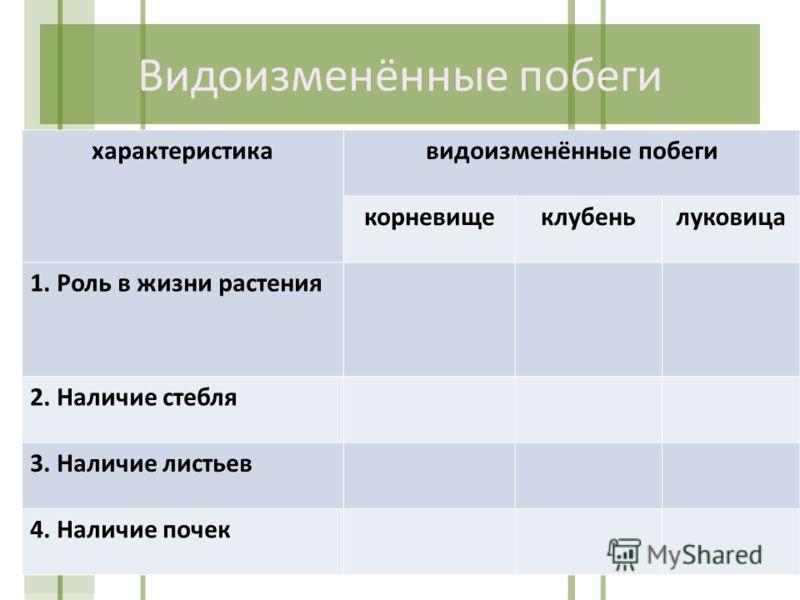 Видоизменённые побеги характеристикавидоизменённые побеги корневищеклубеньлуковица 1. Роль в жизни растения 2. Наличие стебля 3. Наличие листьев 4. Наличие почек