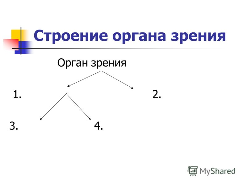 Строение органа зрения Орган зрения 1. 2. 3. 4.