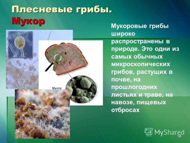 16 Плесневые грибы. Мукор Мукоровые грибы широко распространены в природе. Это одни из самых обычных микроскопических грибов, растущих в почве, на прошлогодних листьях и траве, на навозе, пищевых отбросах