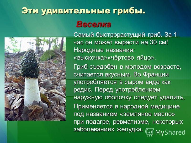 Эти удивительные грибы. Веселка Веселка Самый быстрорастущий гриб. За 1 час он может вырасти на 30 см! Народные названия: «выскочка»«чёртово яйцо». Гриб съедобен в молодом возрасте, считается вкусным. Во Франции употребляется в сыром виде как редис.