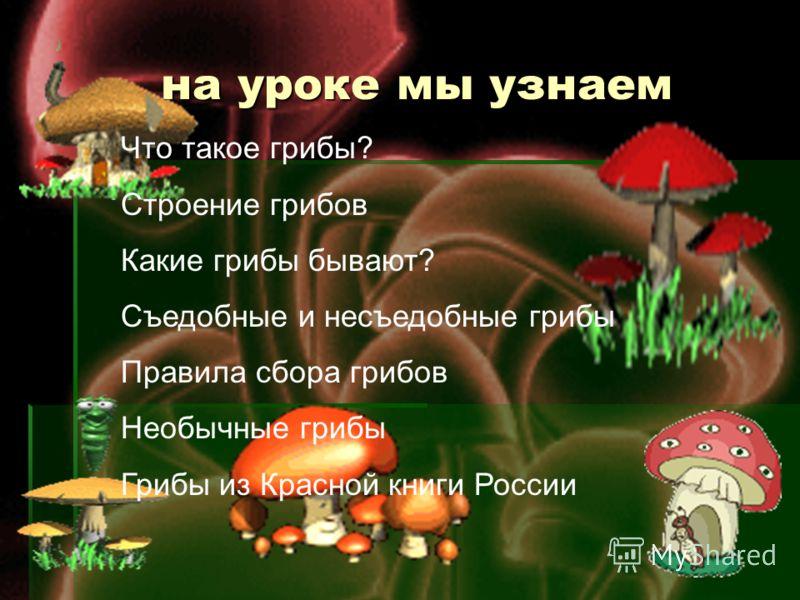 на уроке мы узнаем на уроке мы узнаем Что такое грибы? Строение грибов Какие грибы бывают? Съедобные и несъедобные грибы Правила сбора грибов Необычные грибы Грибы из Красной книги России