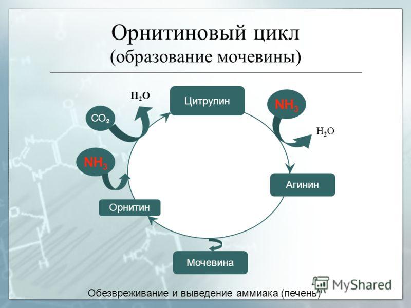 Орнитин