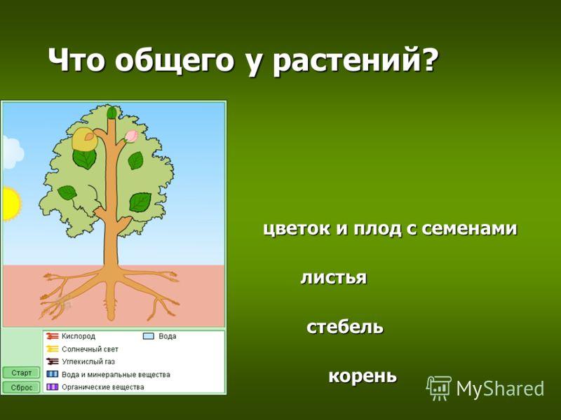 Что общего у растений? цветок и плод с семенами листья стебель корень