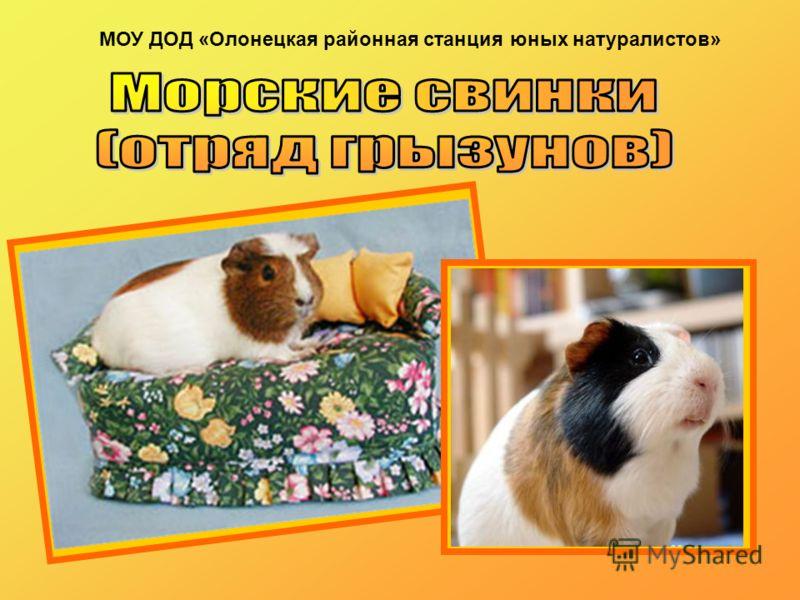 МОУ ДОД «Олонецкая районная станция юных натуралистов»