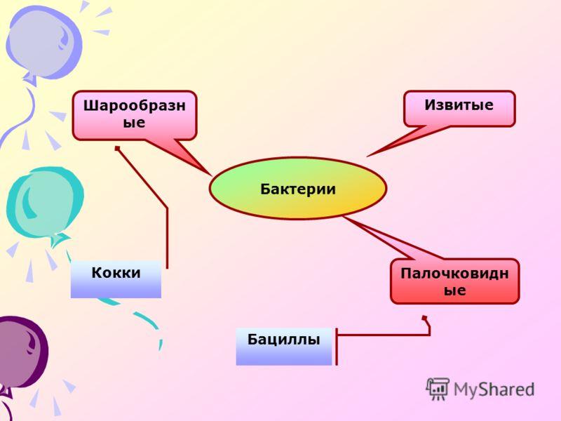 Бактерии Палочковидн ые Шарообразн ые Извитые Кокки Бациллы