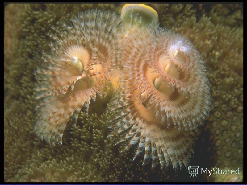Различают несколько зон жизни океана. Наиболее населена верхняя толща воды, глубиной до 300 метров, так как это наиболее освещенная часть. Зона на глубине от 300 до 1000 метров носит названия области полумрака. Различают несколько зон жизни океана. Н