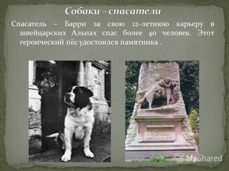 Спасатель – Барри за свою 12-летнюю карьеру в швейцарских Альпах спас более 40 человек. Этот героический пёс удостоился памятника.