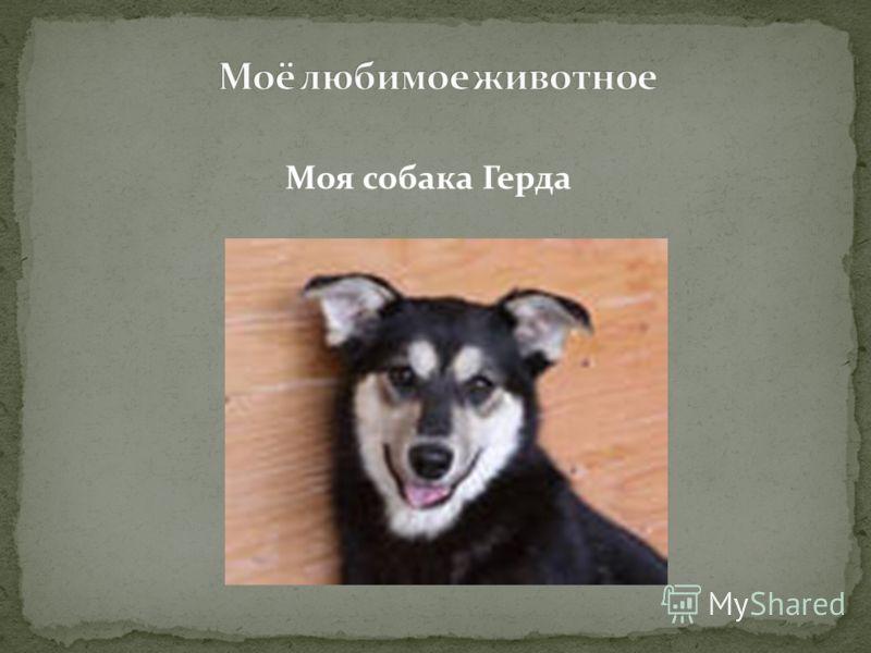 Моя собака Герда