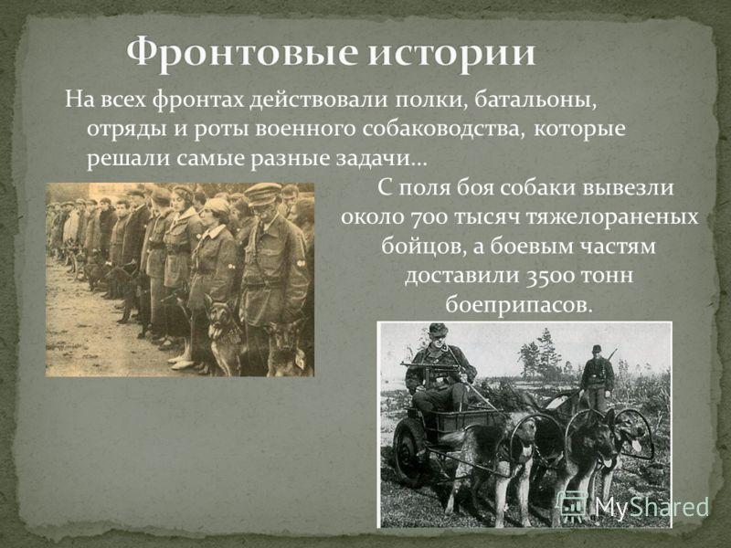 На всех фронтах действовали полки, батальоны, отряды и роты военного собаководства, которые решали самые разные задачи… С поля боя собаки вывезли около 700 тысяч тяжелораненых бойцов, а боевым частям доставили 3500 тонн боеприпасов.
