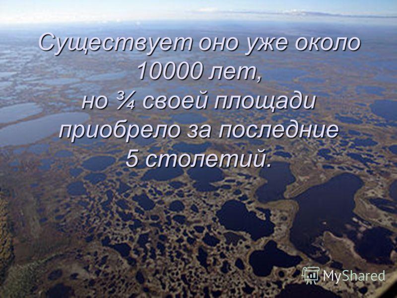 Существует оно уже около 10000 лет, но ¾ своей площади приобрело за последние 5 столетий.