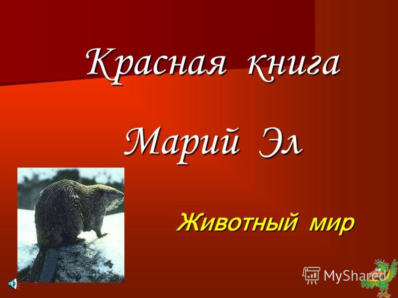 красная книга республики беларусь картинки животных