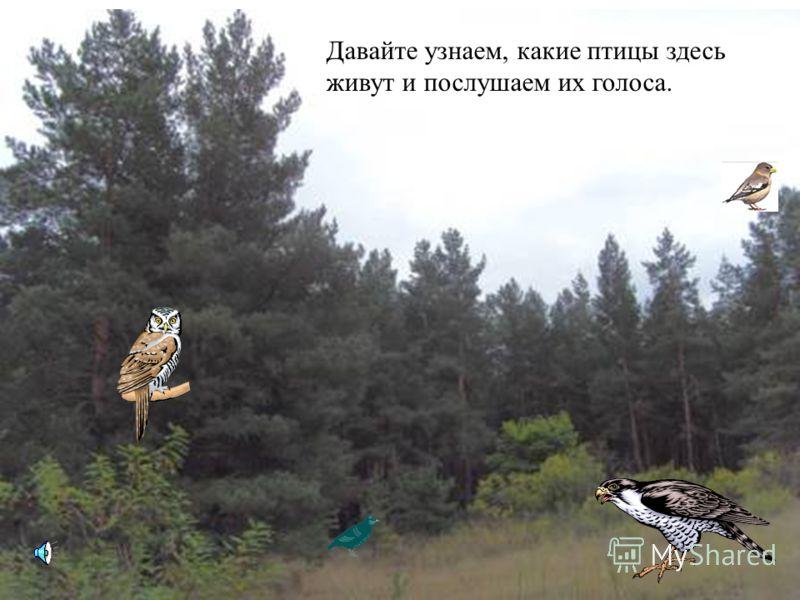Если в лес пришёл гулять, Свежим воздухом дышать, Бегай, прыгай и играй, Только, чур, не забывай, Что в лесу нельзя шуметь, Даже очень громко петь. Испугаются зверушки, Убегут с лесной опушки. Бабочки пускай летают, Ну кому они мешают? Здесь не нужно