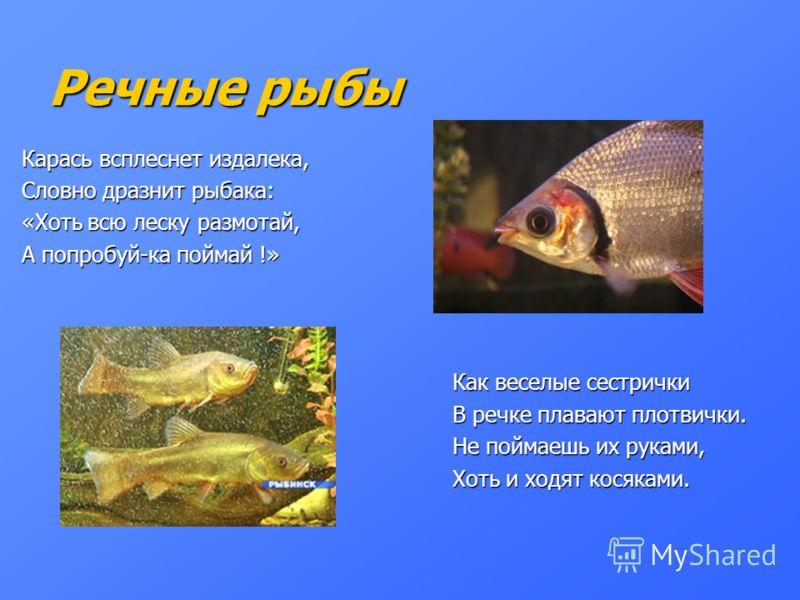 Речные рыбы Карась всплеснет издалека, Словно дразнит рыбака: «Хоть всю леску размотай, А попробуй-ка поймай !» Как веселые сестрички Как веселые сестрички В речке плавают плотвички. В речке плавают плотвички. Не поймаешь их руками, Не поймаешь их ру