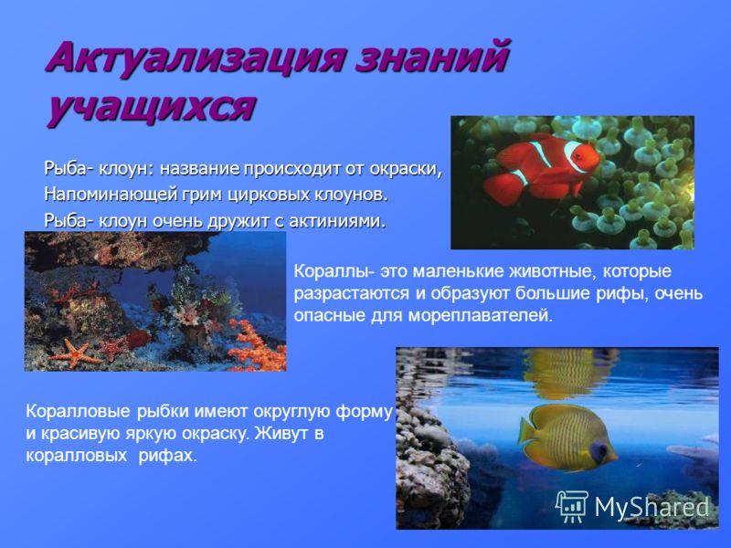 Актуализация знаний учащихся Рыба- клоун: название происходит от окраски, Напоминающей грим цирковых клоунов. Рыба- клоун очень дружит с актиниями. Кораллы- это маленькие животные, которые разрастаются и образуют большие рифы, очень опасные для мореп
