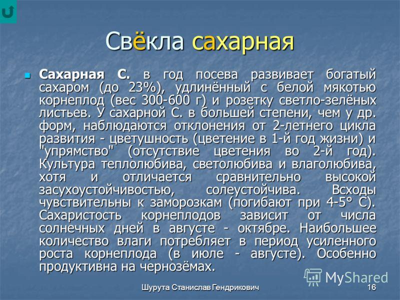 Шурута Станислав Гендрикович15 С. в X-XI вв. была известна в Киевской Руси, в 13-14 вв. - в странах Западной Европы. В XVI-XVII вв. произошла дифференциация её на столовые и кормовые формы; в XVIII в. из гибридных форм кормовой С. обособилась сахарна