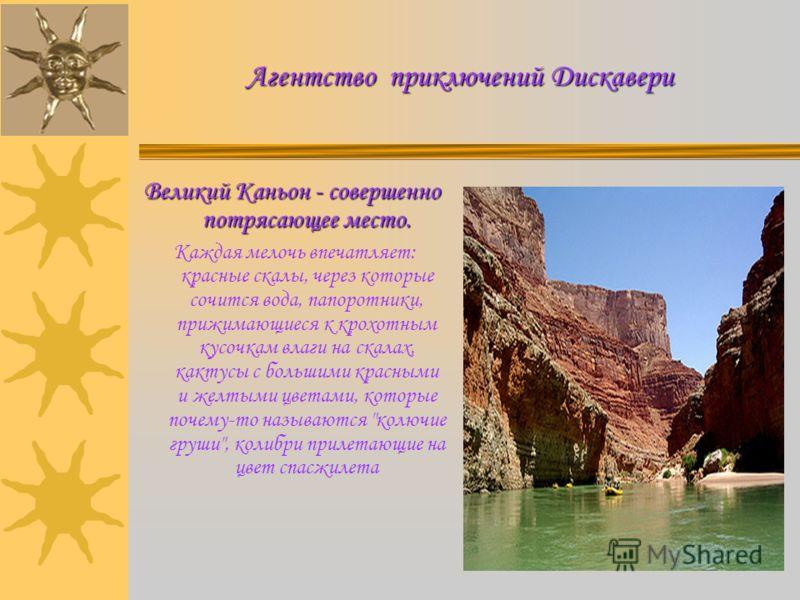 Агентство приключений Дискавери Великий Каньон - совершенно потрясающее место. Каждая мелочь впечатляет: красные скалы, через которые сочится вода, папоротники, прижимающиеся к крохотным кусочкам влаги на скалах, кактусы с большими красными и желтыми