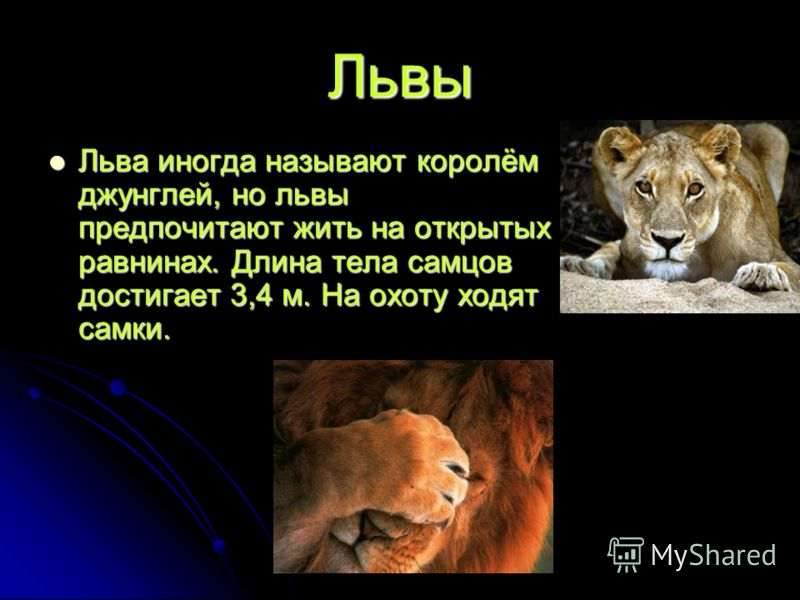 Львы Льва иногда называют королём джунглей, но львы предпочитают жить на открытых равнинах. Длина тела самцов достигает 3,4 м. На охоту ходят самки. Льва иногда называют королём джунглей, но львы предпочитают жить на открытых равнинах. Длина тела сам