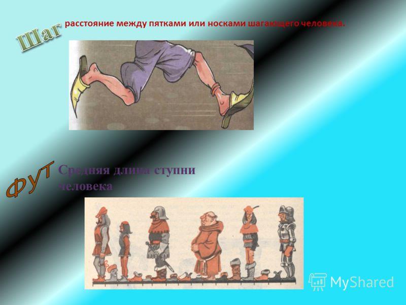 расстояние между пятками или носками шагающего человека. Средняя длина ступни человека