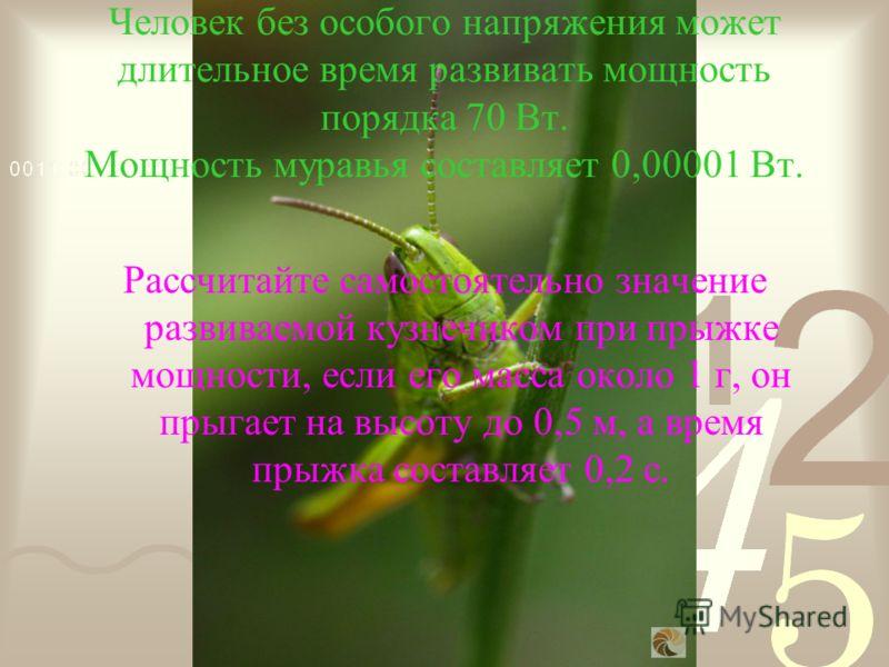 Человек без особого напряжения может длительное время развивать мощность порядка 70 Вт. Мощность муравья составляет 0,00001 Вт. Рассчитайте самостоятельно значение развиваемой кузнечиком при прыжке мощности, если его масса около 1 г, он прыгает на вы