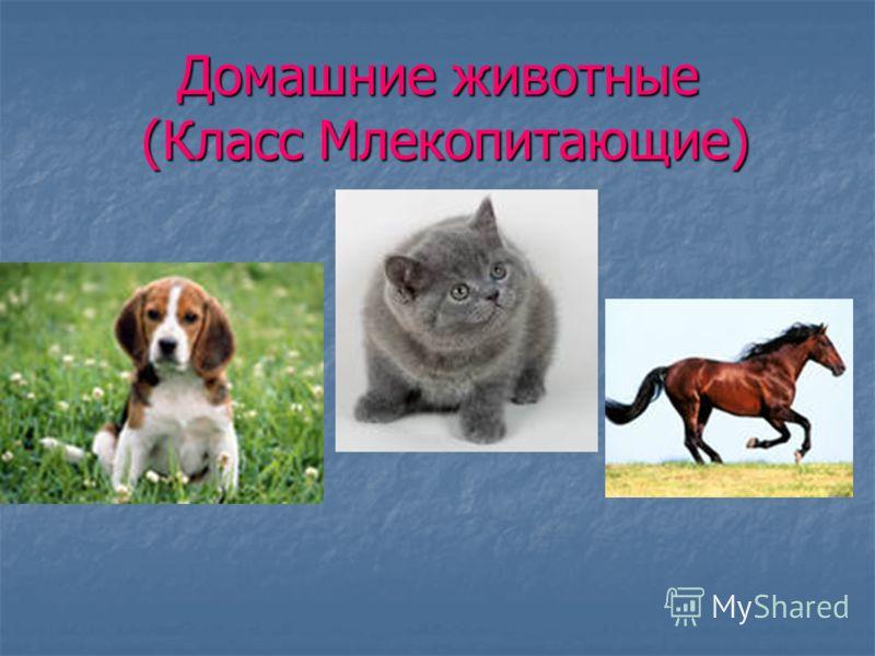 Домашние животные (Класс Млекопитающие)