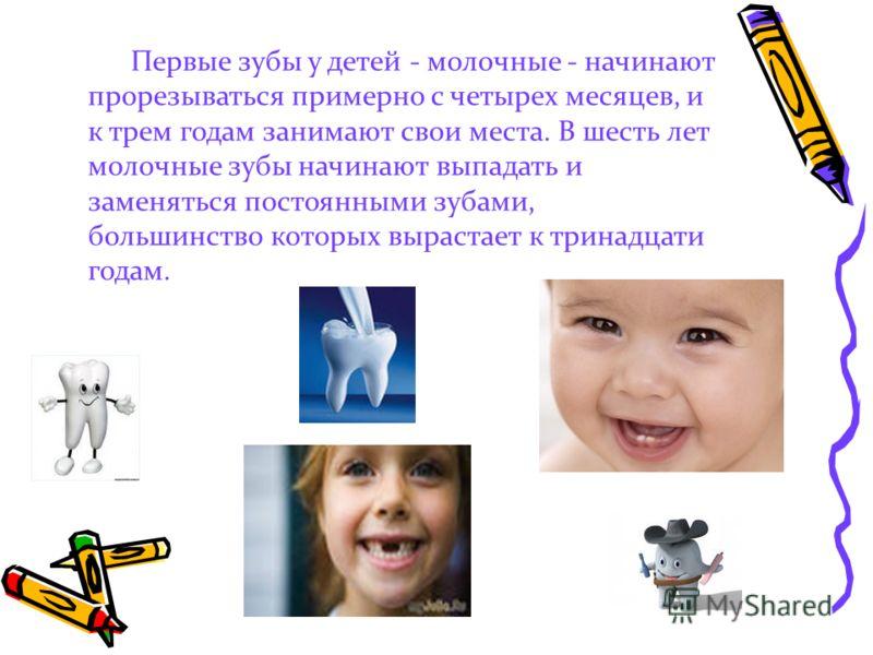 Первые зубы у детей - молочные - начинают прорезываться примерно с четырех месяцев, и к трем годам занимают свои места. В шесть лет молочные зубы начинают выпадать и заменяться постоянными зубами, большинство которых вырастает к тринадцати годам.