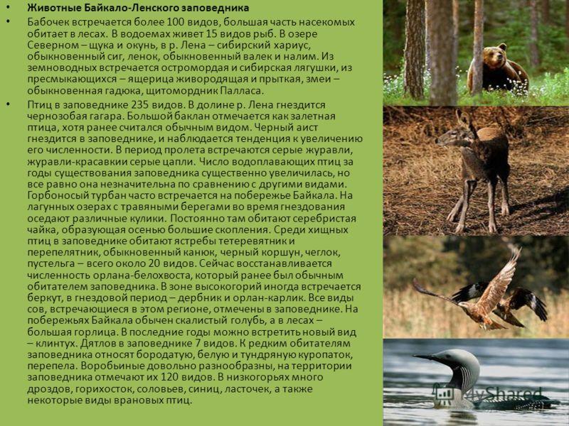 Природа Байкало-Ленского заповедника Рельеф территории формировался под влиянием неотектонических процессов и горно- долинного оледенения. Заповедник расположен в зоне повышенной сейсмичности, в год бывает до 200 землетрясений. Теплые мелководные при