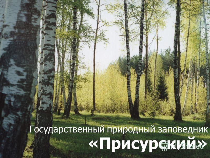Государственный природный заповедник «Присурский»