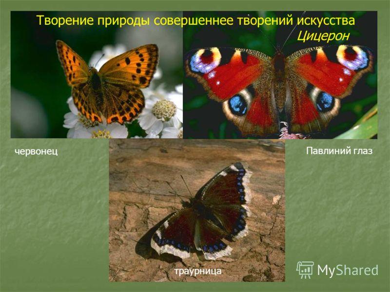 червонец Павлиний глаз траурница Творение природы совершеннее творений искусства Цицерон