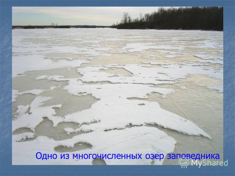 Одно из многочисленных озер заповедника
