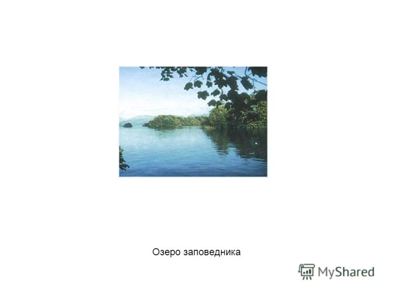Озеро заповедника