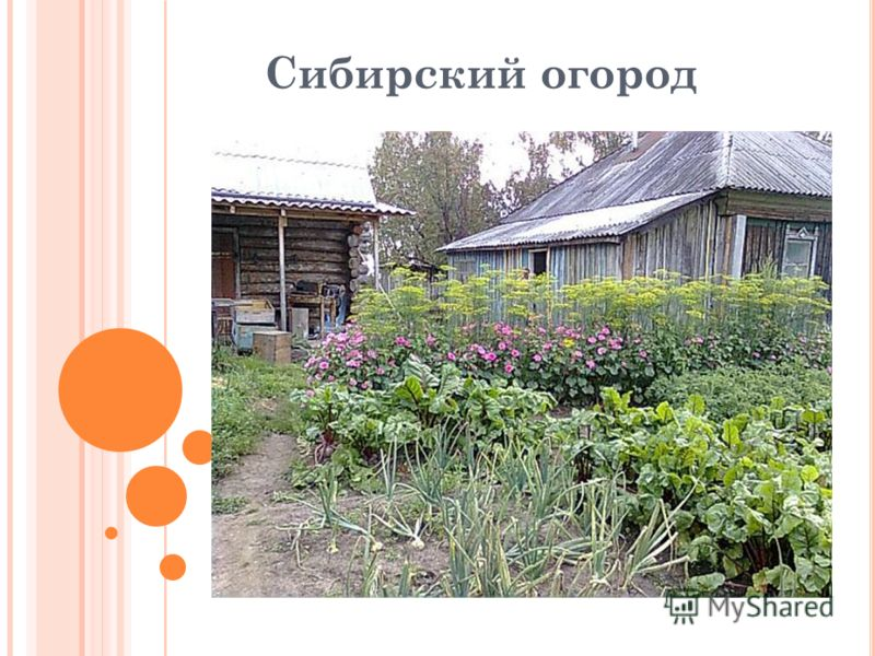 Сибирский огород