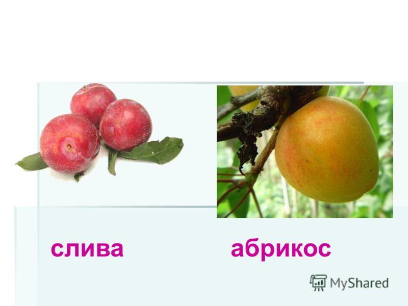 слива абрикос