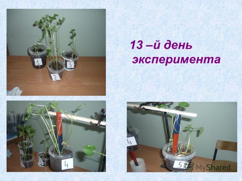 13 –й день эксперимента