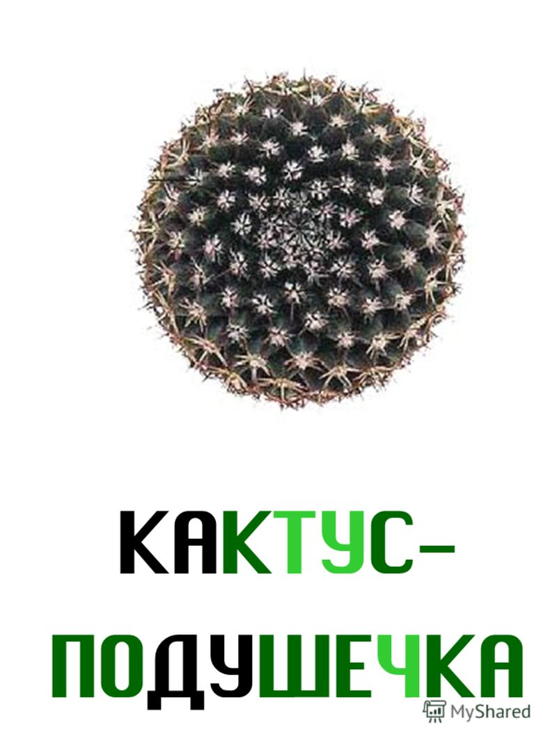 КАКТУС- ПОДУШЕЧКА