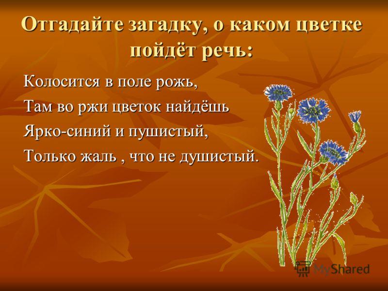 Отгадайте загадку, о каком цветке пойдёт речь: Колосится в поле рожь, Там во ржи цветок найдёшь Ярко-синий и пушистый, Только жаль, что не душистый.