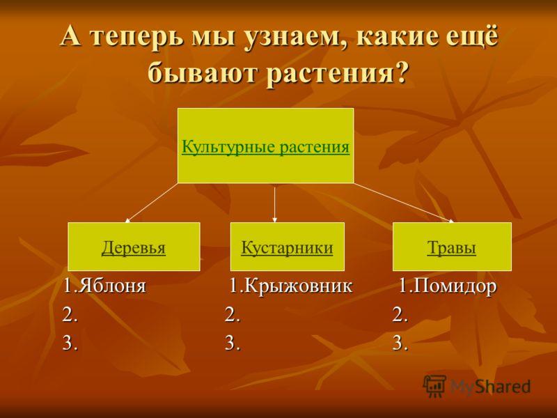А теперь мы узнаем, какие ещё бывают растения? 1.Яблоня 1.Крыжовник 1.Помидор 2. 2. 2. 3. 3. 3. Культурные растения ДеревьяКустарникиТравы