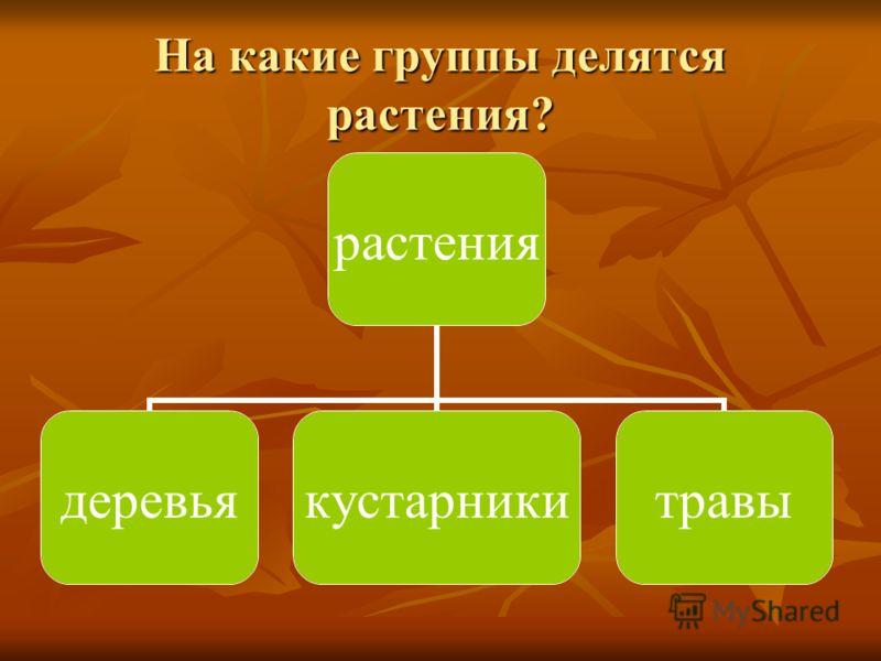 На какие группы делятся растения? растения деревьякустарникитравы