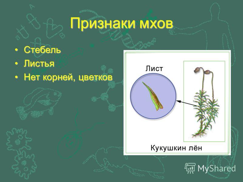 Признаки мхов СтебельСтебель ЛистьяЛистья Нет корней, цветковНет корней, цветков