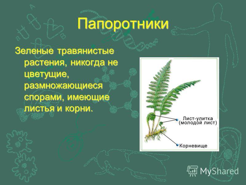 Папоротники Зеленые травянистые растения, никогда не цветущие, размножающиеся спорами, имеющие листья и корни.